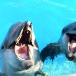 Amazing Cute Dolphins at Attica Park, Athens
