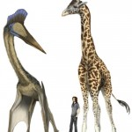 Giraffe-sized dinosaurs they could fly huge distances a...