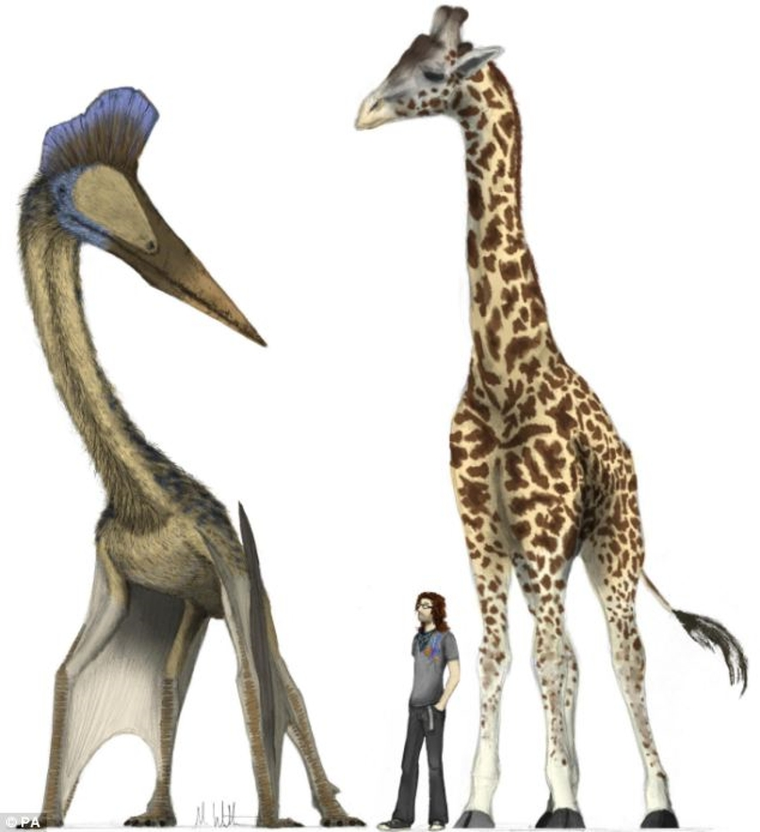 Giraffe-sized dinosaurs they could fly huge distances