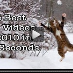 The Best Cat video