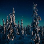 Candle Spruces at Night, Finland