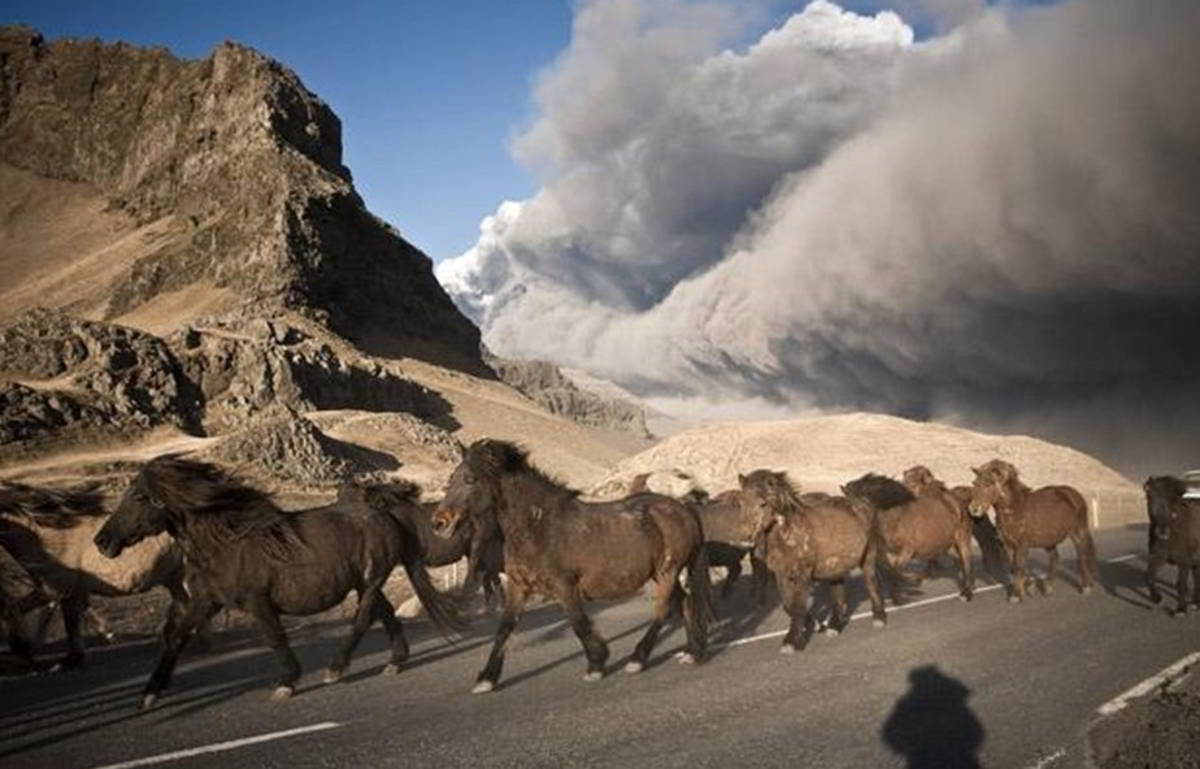 Horses are herded to safety