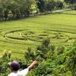 Crop circle that appeared in Sleman, Indonesia (3x vide...