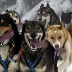 Musher competes in Alps