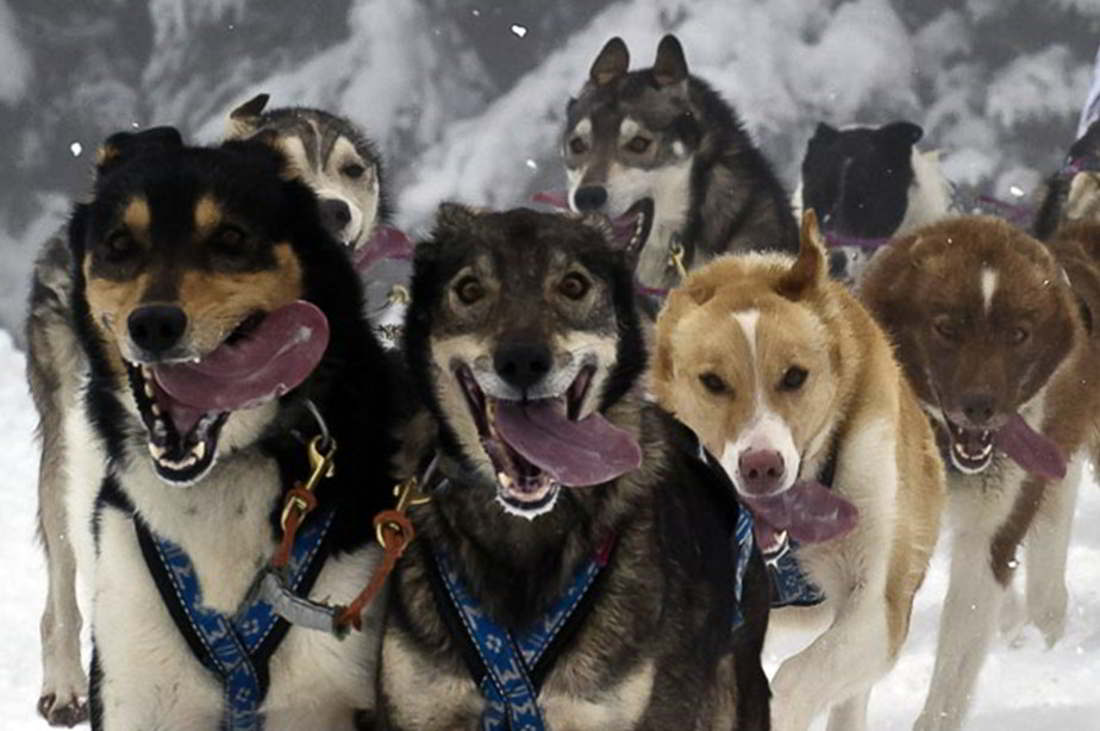 Musher competes