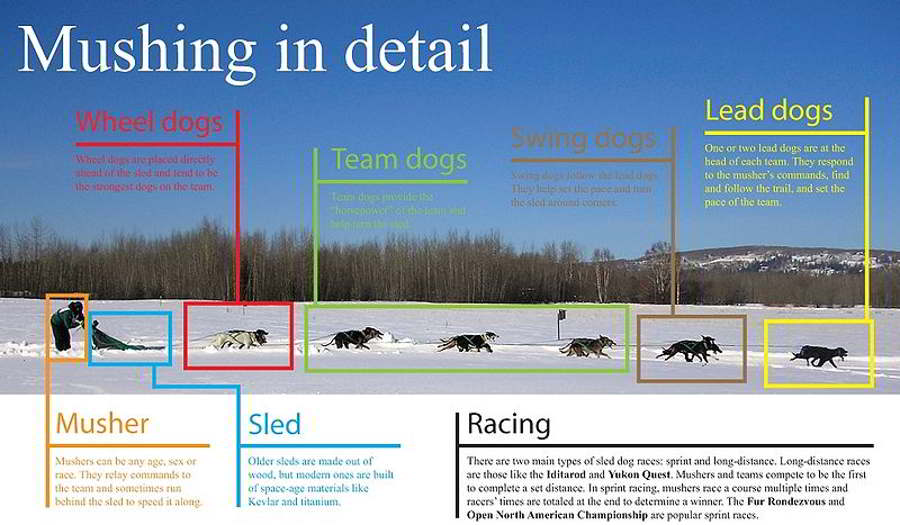 Musher competes 2