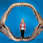 Largest set of prehistoric shark jaws