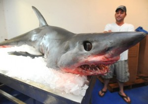 Mako shark jumped into the boat