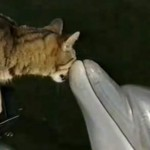 Cat and dolphins playing together