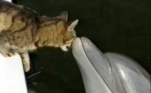 Cat and dolphins