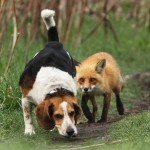 World's worst hunting Dog
