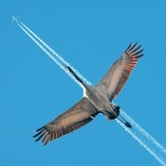 Sky-bird airplane
