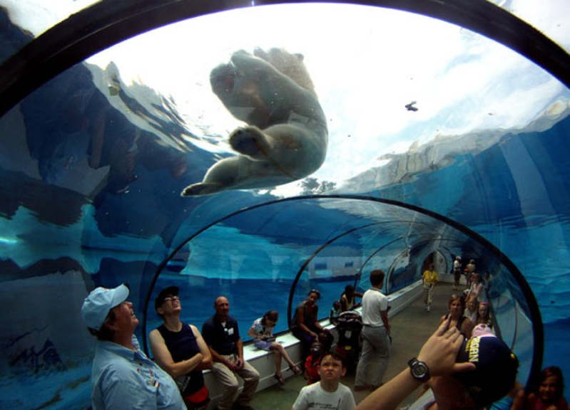 Detroit Zoo Arctic Ring Of Life
