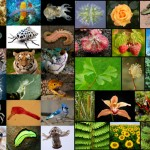 Earth is home to 8.7 million species
