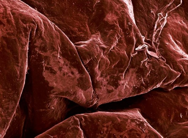 microscope images of food (9)