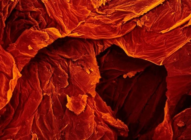 microscope images of food (12)