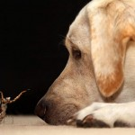 Praying mantis and Labrador