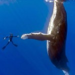 High Five with a Humpback Whale