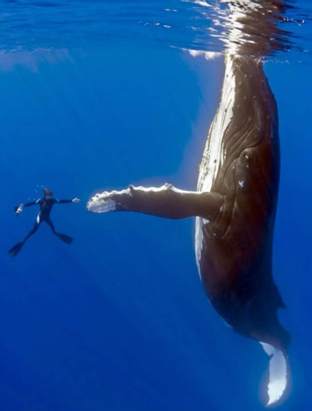Man and Humpback Whale