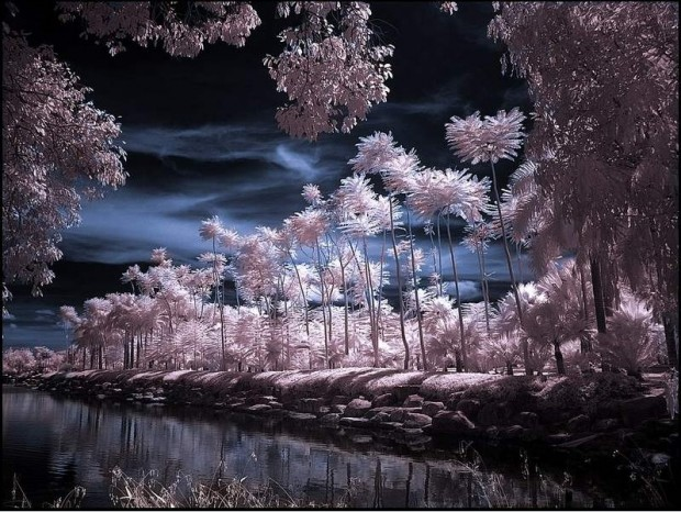 Infrared Photography (1)