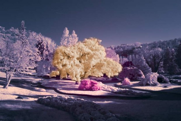 Infrared Photography (4)
