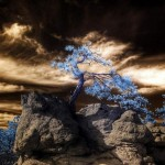 Impressive Infrared Photography
