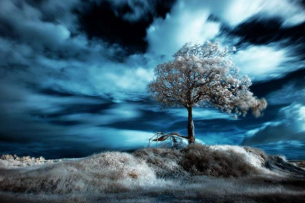Infrared Photography (2)