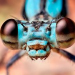 Macro Photography of Insects eyes