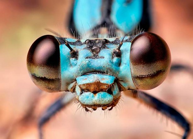 Insects eyes