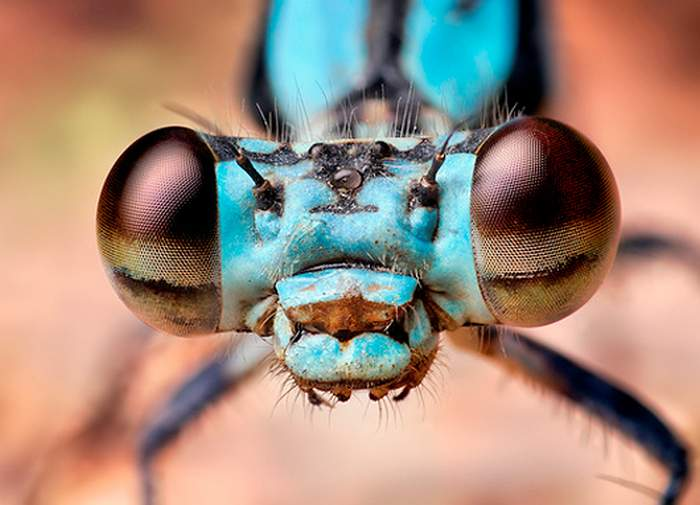 Insects eyes (5)