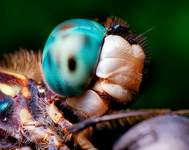 Insects eyes (3)