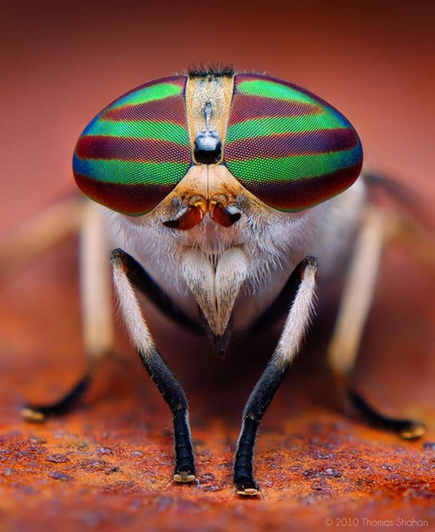 Insects eyes (2)