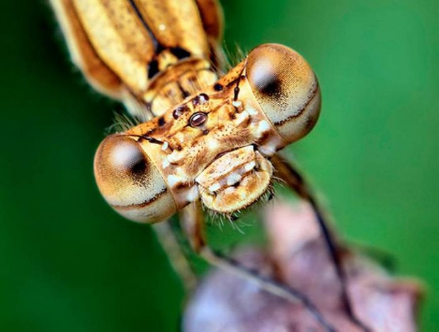 Insects eyes (1)