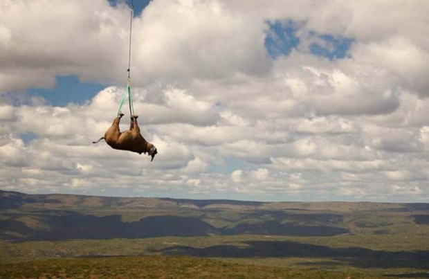 Black Rhino is carried by military helicopter