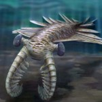 Anomalocaris- 500m year-old predator