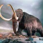 Mammoth to be brought back to life