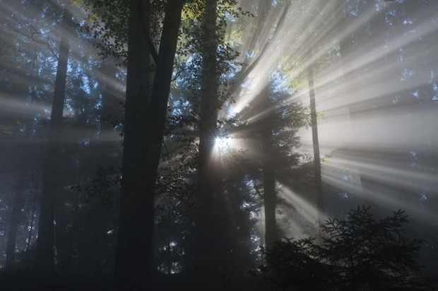 crepuscular rays, made visible by fog droplets