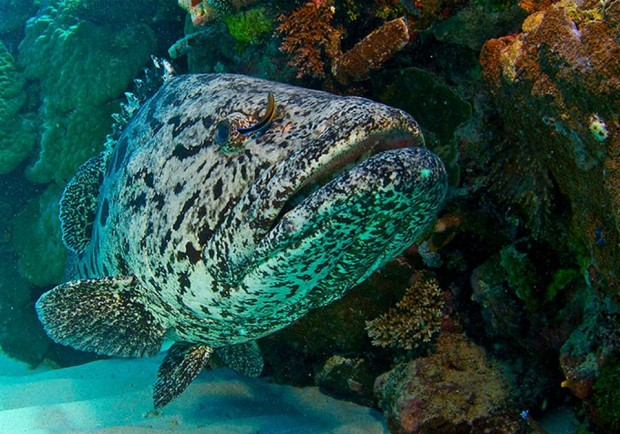 BBC wildlife documentary, the Great Barrier Reef