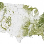 Amazing map shows where the Trees are