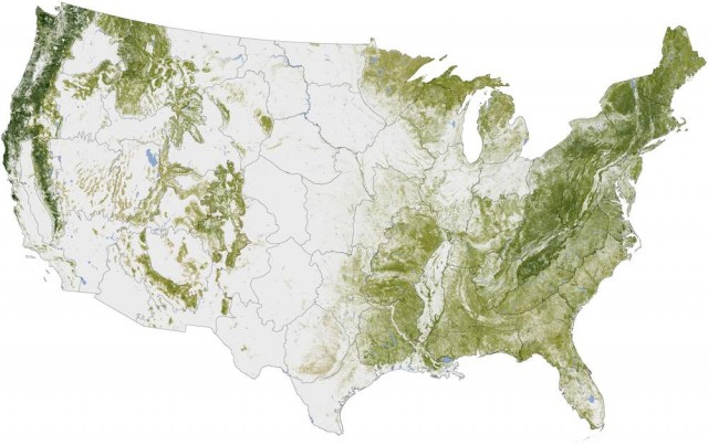Map shows every tree in the United States