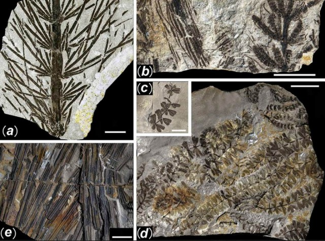 298 million-year-old Buried Forest in a coal mine in Yuda (6)