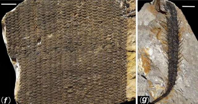 298 million-year-old Buried Forest in a coal mine in Yuda