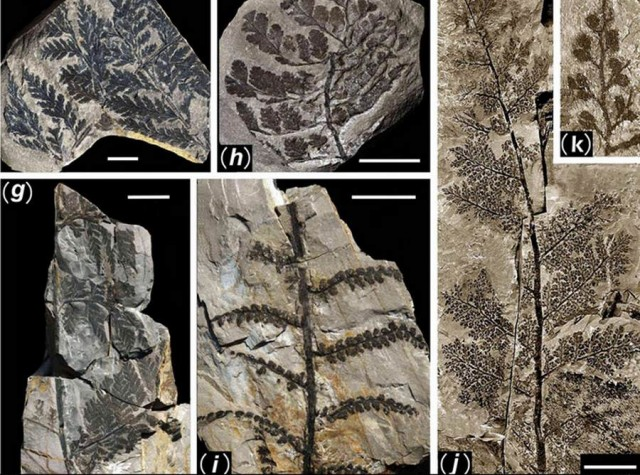 298 million-year-old Buried Forest in a coal mine in Yuda (4)