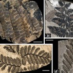 298 million-year-old Buried Forest