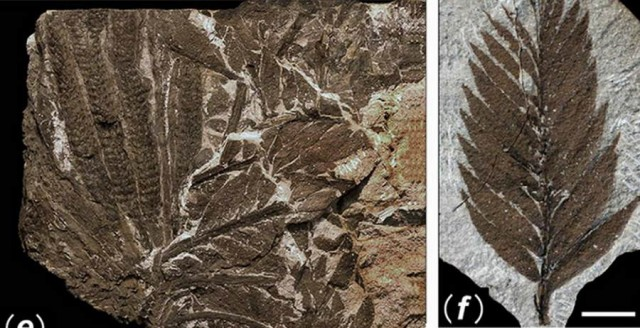 298 million-year-old Buried Forest in a coal mine in Yuda (2)