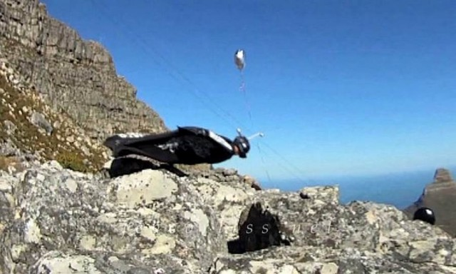 Jeb Corliss - Grounded