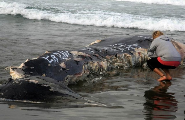 remains of a whale washed ashore