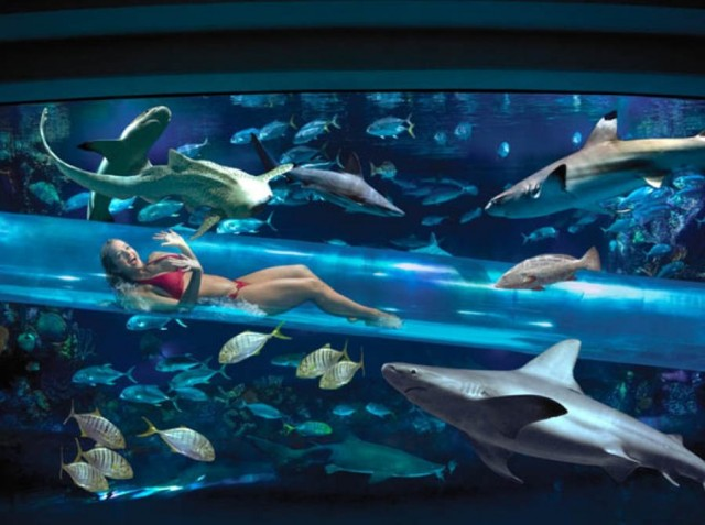 Shark Chute at the Golden Nugget hotel in Las Vegas