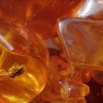 Baltic amber with insects