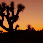 Joshua Tree Journey- part 2